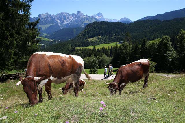 dovolena v rakousku